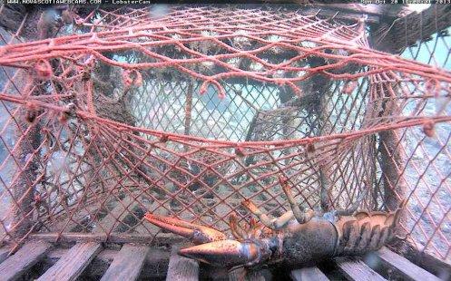 Lobster-ko